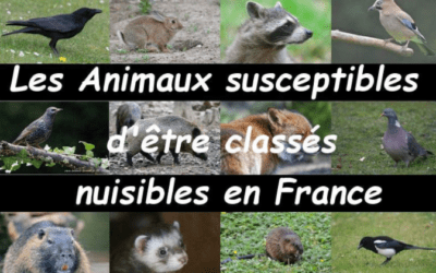 Animaux nuisibles