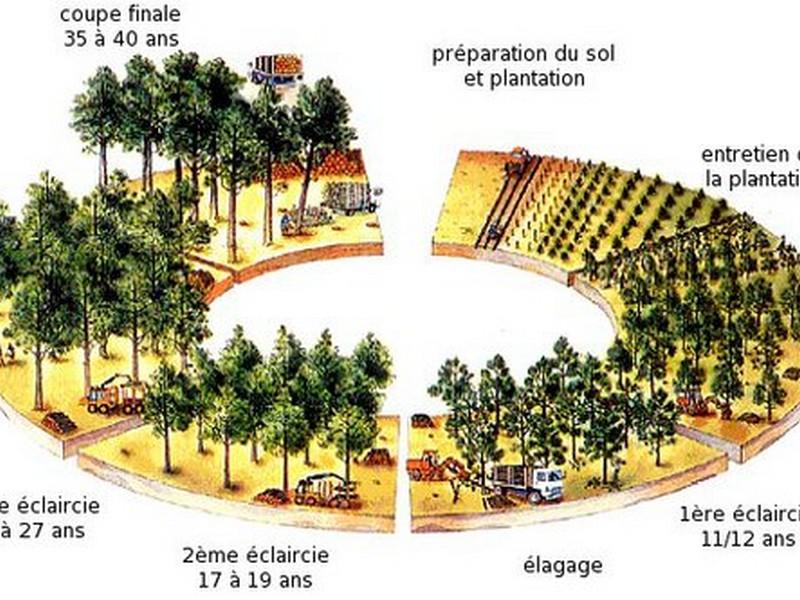 Coupes forestières et élagage