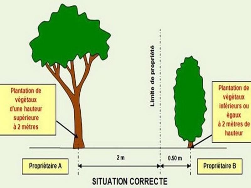 Voisinage : arbres et plantations