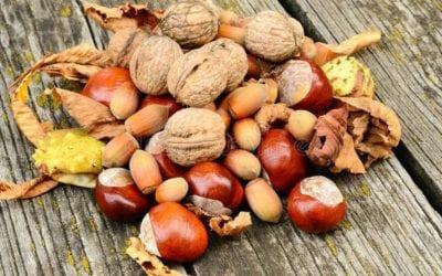 La culture de la noix